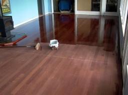 floor_sanding-255x191