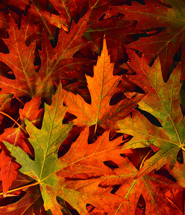 Sprucing Up Your Yard for Fall
